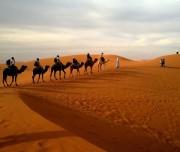 deserto cammelli